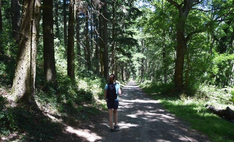 descente sous les arbres Col de la Luere
