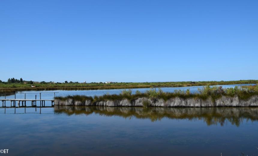 Réserve ornithologique du Teich ©ET